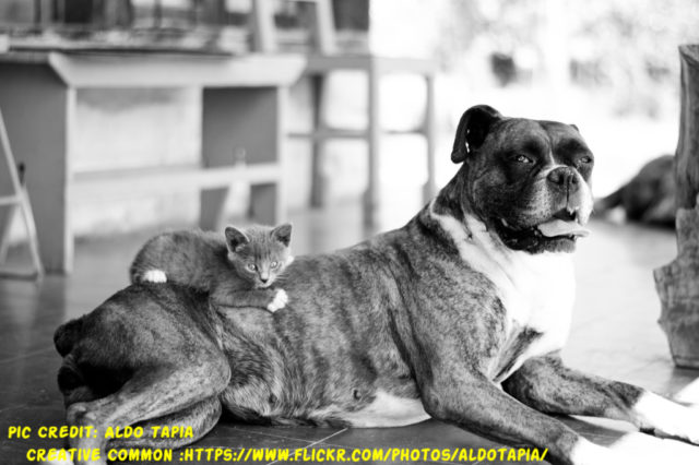 How long does it take for a boxer to give birth