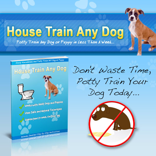 How to train any house dog